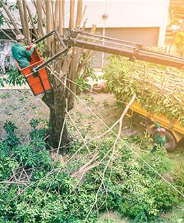 Can Tree Service Help Save Your Trees' Lives?