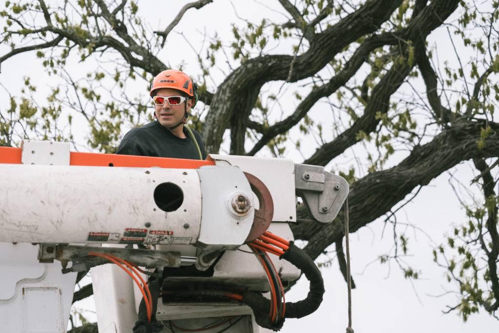 Kruse Tree Trim Amp Construction Tree Service Near Me