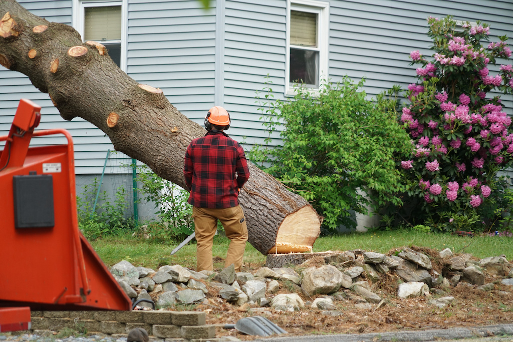 Using Tree Removal for Property Enhancement