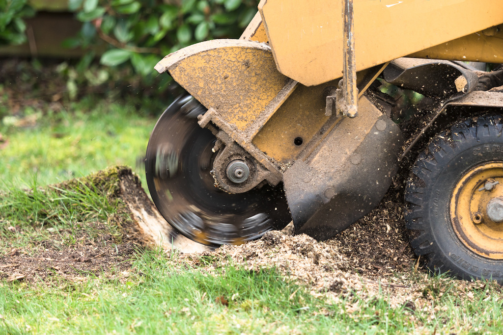 When to Call A Stump Grinder