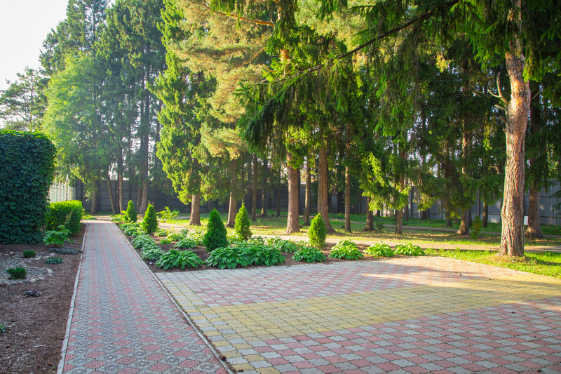 How Your Backyard Benefits from Keeping Trees Trimmed